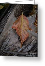 Dried Leaf On Log Greeting Card