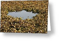 Dried Leaves In A Pond Greeting Card