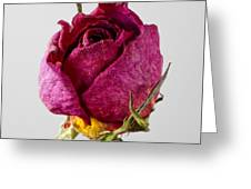 Dried Rose 4 Greeting Card