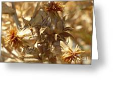 Dried Safflower Greeting Card