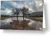 Dried Tree Reflected Greeting Card