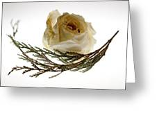 Dried White Rose Greeting Card