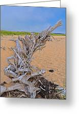 Drift Wood On The Beach Greeting Card
