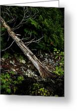 Drifted Tree Greeting Card