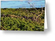 Driftwood Among The Naupaka  Greeting Card