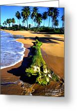Driftwood And Palms Greeting Card