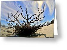 Driftwood And Roots Hunting Island Sc Greeting Card by Lisa Wooten