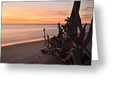 Driftwood At Sunset Greeting Card