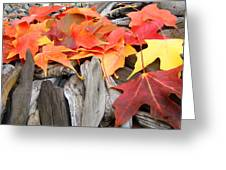 Driftwood Autumn Leaves Art Prints Baslee Troutman Greeting Card
