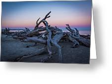 Driftwood Beach 1 Greeting Card