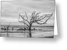 Still Standing In Black And White Greeting Card