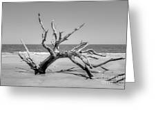 Driftwood Beach In Black And White Greeting Card
