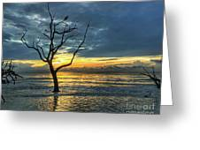 Driftwood Beach Sunrise Jekyll Island Georgia Greeting Card