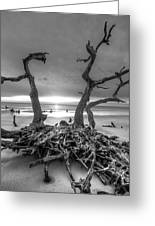 Driftwood Black And White Greeting Card