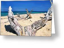 Driftwood Buck Island National Park Greeting Card