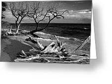 Driftwood Bw Fine Art Photography Print Greeting Card