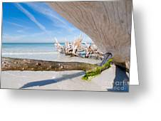 Driftwood C141347 Greeting Card