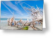 Driftwood C141348 Greeting Card
