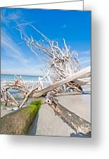 Driftwood C141349 Greeting Card