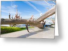 Driftwood C141351 Greeting Card