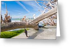 Driftwood C141352 Greeting Card