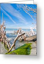 Driftwood C141354 Greeting Card