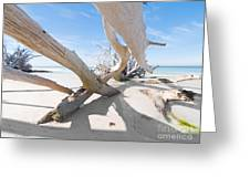 Driftwood C141414 Greeting Card