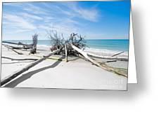 Driftwood C141545 Greeting Card