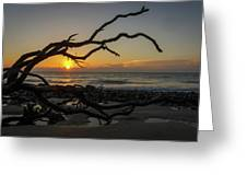 Driftwood Dawn Greeting Card