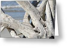Driftwood Detail Greeting Card
