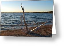 Driftwood Greeting Card