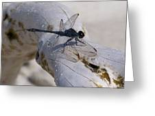 Driftwood Dragofly Greeting Card