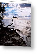 Driftwood Dragon-barnegat Bay Greeting Card