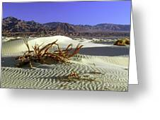 Driftwood Dune Greeting Card