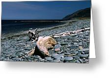 Driftwood On Rocky Beach Greeting Card