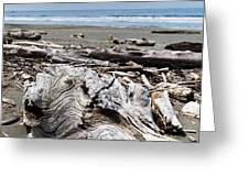 Driftwood On The Beach Greeting Card