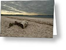 Driftwood On West Sands Greeting Card