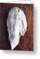Driftwood Shell Greeting Card