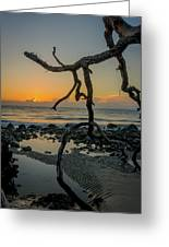 Driftwood Sunrise Greeting Card