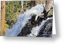 Drink Lifes Water Free Greeting Card
