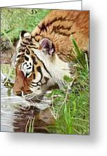 Drinking Tiger Greeting Card