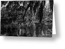 Drippin With Spanish Moss At Middleton Place Greeting Card