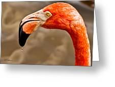 Dripping Flamingo Greeting Card