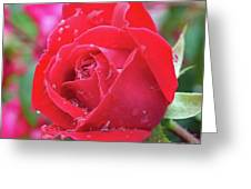 Dripping In Beauty - Double Knock Out Rose Greeting Card