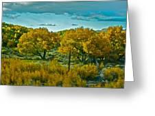 Driving Foliage Greeting Card