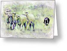Driving Sheep Greeting Card