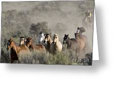 Driving The Horses Greeting Card