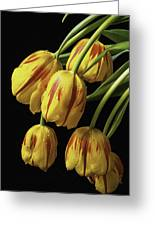 Drooping Tulips Greeting Card