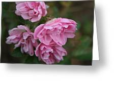 Droopy Pink Roses Greeting Card
