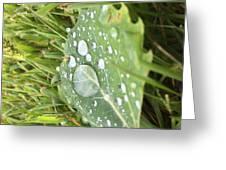 Droplet Greeting Card